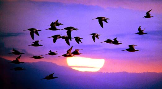 Why do birds migrate - bird migration facts