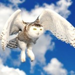 Owl Facts For Kids – Owl Vision – Owl Feathers