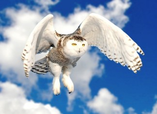 Owl facts for kids - snowy owl