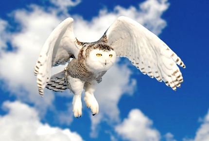 Owl Facts For Kids - Owl Vision - Owl Feathers - photo#7