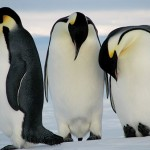 Penguin Facts for Kids – Amazing and Interesting