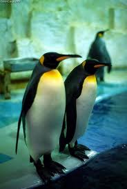 Emperor penguin - Different Types of penguins