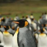 Types of Penguins – Different Types of Penguins