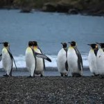 Where Do Penguins Live – Different Countries and Islands