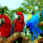 How long Do Parrots Live – Lifespan of Parrots