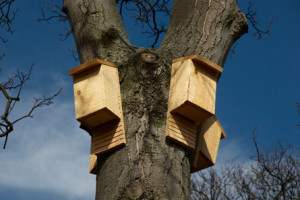 Where Do Bats Live - Bats Houses