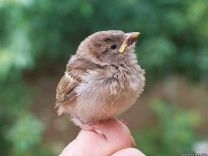 What to feed a baby bird - Baby bird on hand
