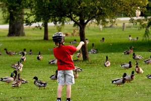 what to feed ducks - boy feeding ducks