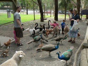what to feed ducks - feeding ducks