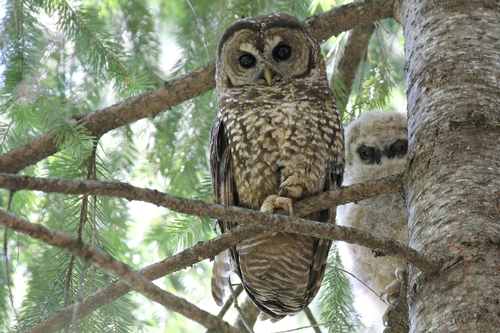 What does an owl eat in the forest What do owls eat