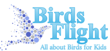 Birds Flight – All about Birds for Kids