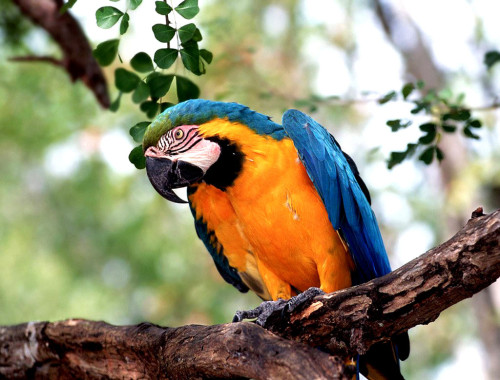 facts about parrots for kids