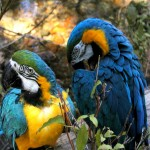 Facts About Parrots For Kids | Parrot Habitat & Diet